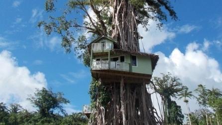 Sembra una semplice casa sull'albero, ma quando capirete cos'è resterete affascinati