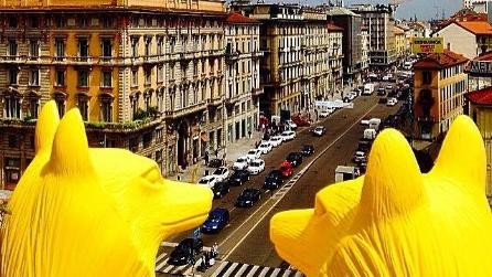 Avvistata foca a venezia segnalazione attendibile - Bastioni di porta venezia ...