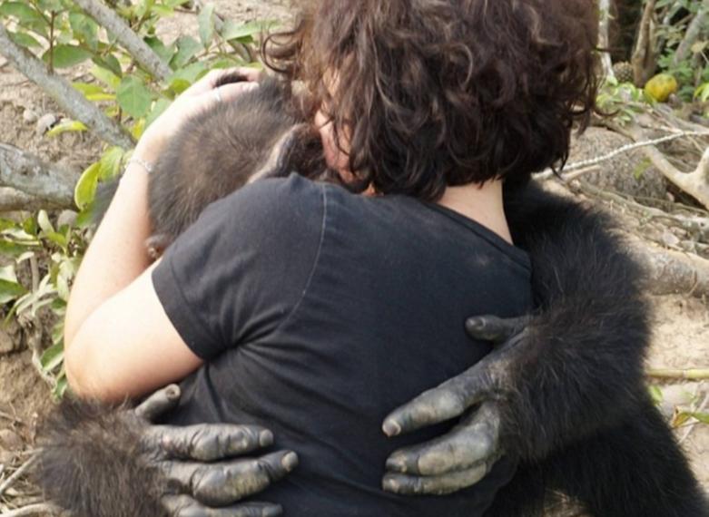 Lo Scimpanz Abbandonato Sullisola Accoglie Con Un Enorme Abbraccio La Volontaria