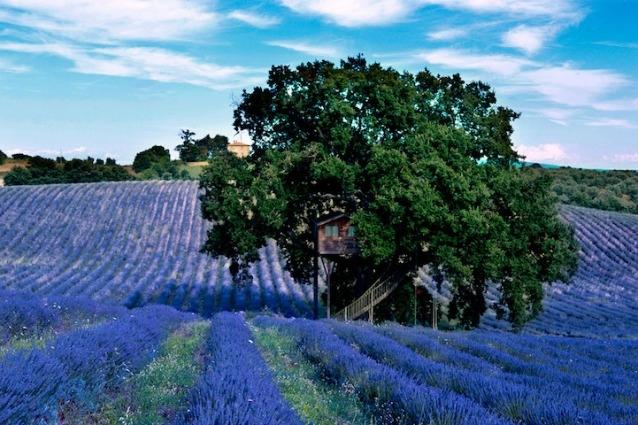 All\'interno della casa sull\'albero più bella d\'Italia