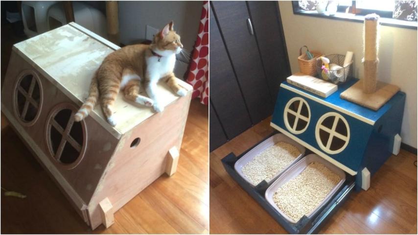 Conosciuto Come costruire una lettiera per gatti: l'idea geniale a prova di  ZT88