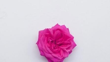 Sembra una semplice rosa: ingrandendo l'immagine resterete incantati
