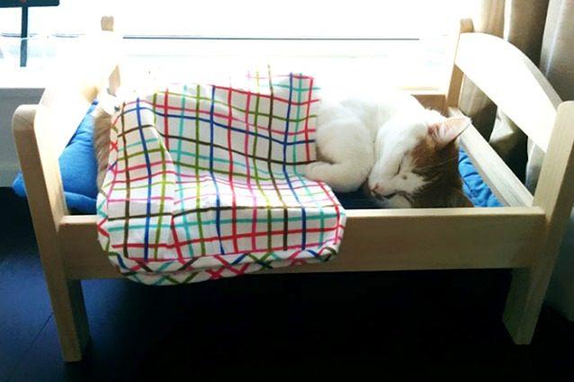 Ikea: i lettini per bambole diventano cucce per gatti randagi