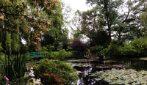 Le Ninfee di Monet al cinema, unincantesimo di acqua e luce