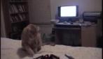 Il gatto Mr. Billy contro il ragno