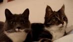 I due gatti parlanti
