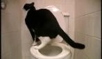 Il gatto che va a fare i bisogni nella toilette