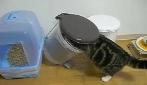 Le migliori acrobazie dell'incredibile gatto Maru
