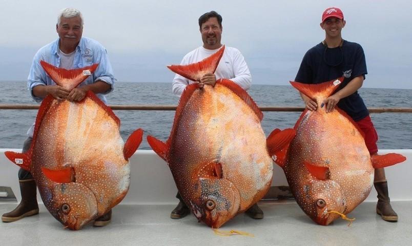 Pescano in un solo giorno tre enormi e rari pesci opah dal for Enormi isole di cucina