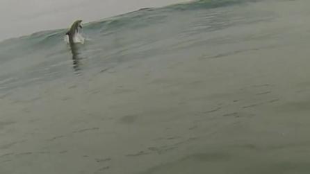 San Diego, fare surf in compagnia di un delfino