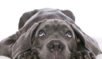 Il cane mangia tutto quello che trova per terra: cosa devo fare?