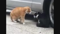 60 secondi di guerra fredda tra due gatti