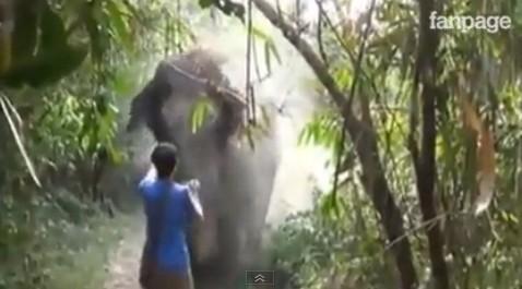 "Turista ferma un elefante ""inferocito"" con un solo gesto della mano"