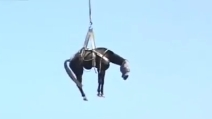 Palermo, spettacolare salvataggio di un cavallo caduto in un profondo dirupo