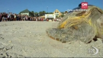 """Il """"lungo"""" viaggio verso il mare della tartaruga in presa diretta"""