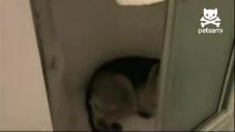 Il cane combinaguai chiede perdono al padrone