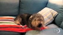 Il pepe nero non piace al cane: attacco di starnuti per Oliver
