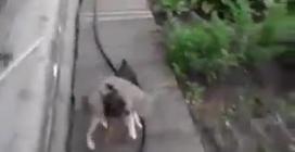 Un cane accompagna il gatto in casa