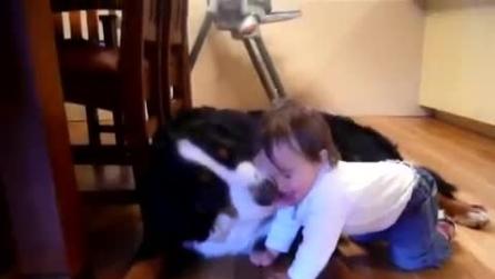 Il cane che con la lingua fa il solletico alla bimba
