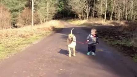 Cane paziente aspetta che il suo piccolo padrone finisca di giocare