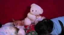 """I cagnolini si addormentano sulle note di """"Bianco Natale"""""""