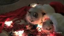 I gattini che aiutano a decorare l'albero di natale