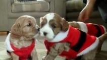 I bellissimi cuccioli con il completino di Natale