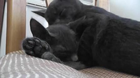 Le dolci coccole tra due gattini