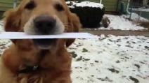 Un cane postino, ritira la posta per il padrone