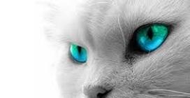 Il gatto più educato del mondo: bussa alla porta per poter entrare