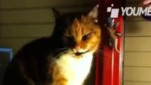 Ludwig, gatto coccoloso