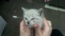 Babette, la gatta ipnotizzata