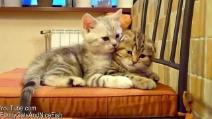 San Valentino, anche i gatti festeggiano la festa dell'amore