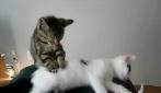 """Due gatti si rilassano con un massaggio """"felino"""""""