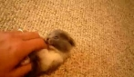 Gattino gioca col suo padrone: Che Spasso!