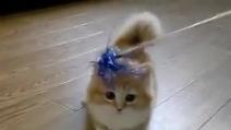 """Ecco """"Fluffy"""", il gatto più bello del pianeta"""