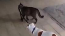Il gatto che porta a spasso il cane