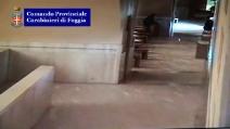 Tentano il furto nella chiesa di Padre Pio
