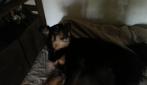 Dafne, il cane che canta Jovanotti