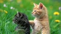 Come fare esercizi e ginnastica con i propri gatti