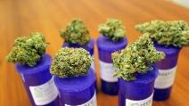 A Los Angeles la convention per l'uso terapeutico della Cannabis
