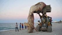 Grossa balena spiaggiata sulle coste della Tunisia