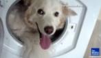 Paura del temporale, si nasconde in lavatrice!