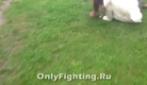 Video Shock: Trans picchiata violentemente in Russia, gli aggressori se la ridono.