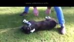Ragazzo compie un miracolo: rianima un cane che aveva smesso di respirare.