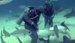 Lo squalo ha un amo in gola, sub infila mano nella bocca per salvarlo.