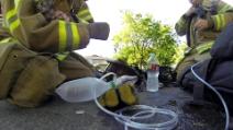 L'eroico pompiere salva la vita di un gattino