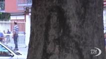 Napoli, Padre Pio in una macchia su un albero, si grida al miracolo