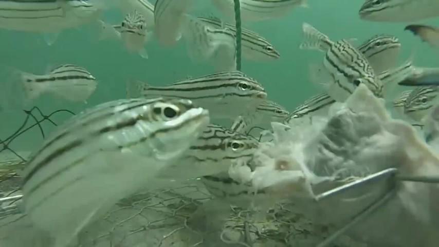 Un giorno da esca per i pesci la meraviglia dei fondali for Immagini coralli marini