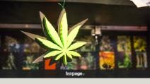 Cannabis libera? In Italia c'è già (in semi). Ecco i growshop